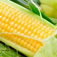 玉米500g